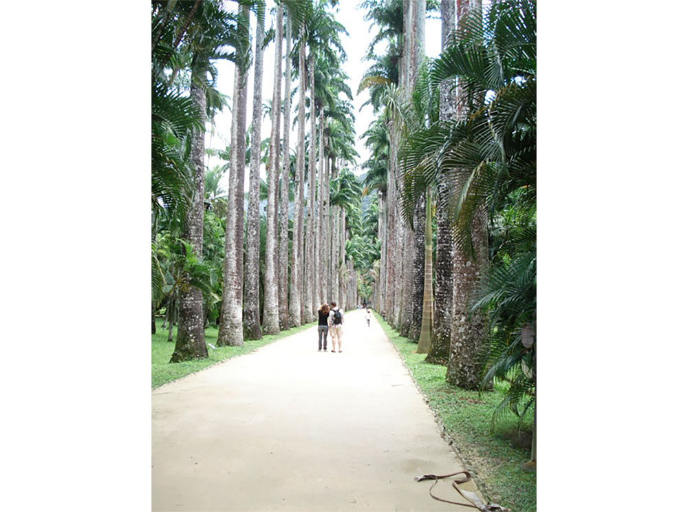 The Avenue of Royal Palms is the principal access from the garden gates into the main parts of the garden. Jardim Botanico, Rio de Janeiro. - Photography by Lola Adeokun.