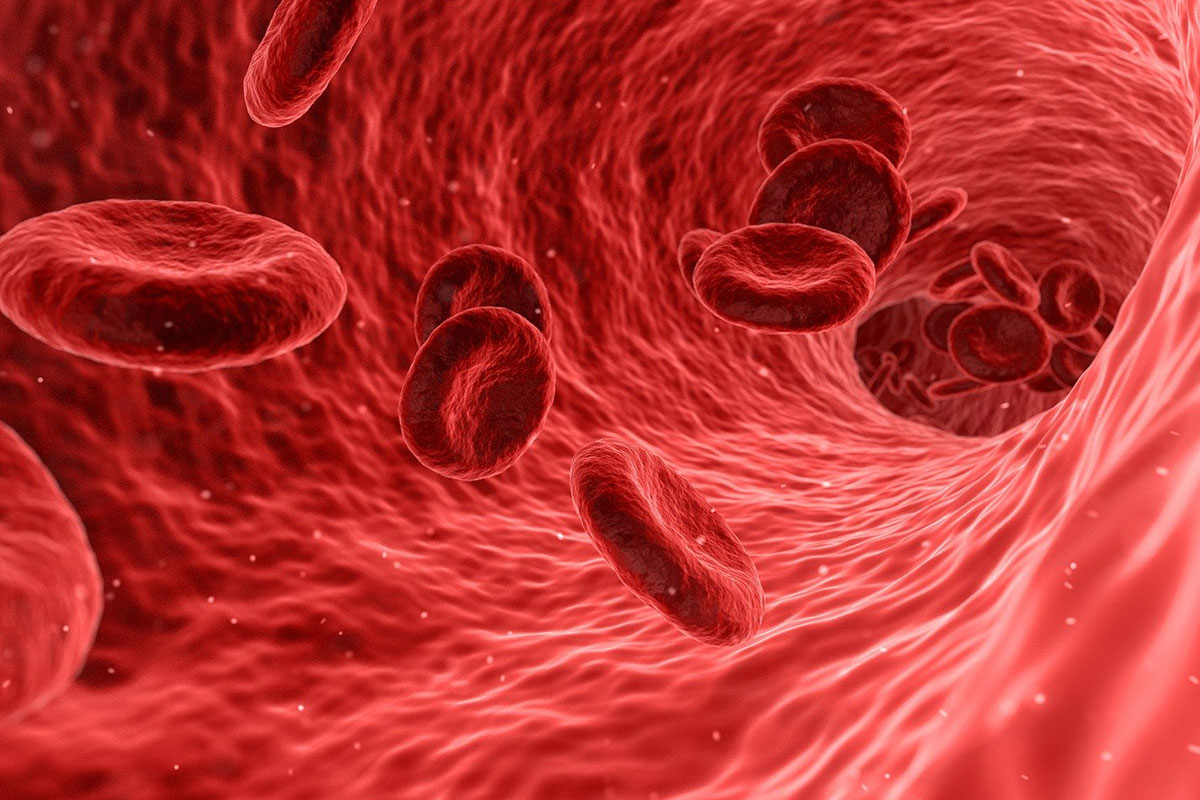 Red blood cells flowing through the human body. Iron is needed by humans to produce haemoglobin, the substance in red blood cells that transports oxygen throughout the body.